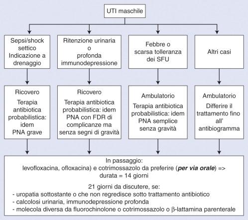 nella prostatite batterica acuta perché il massaggio prostatico provoca shock settico