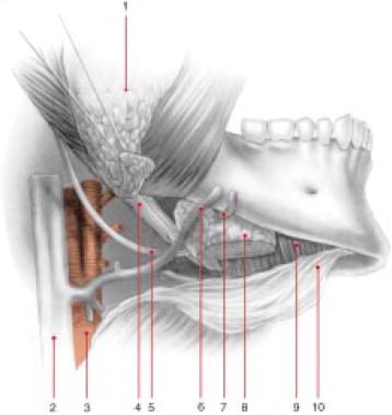 Cirugía de la glándula submaxilar. Cirugía de la glándula sublingual ...