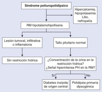 diabetes insípida síntomas deshidratación niño