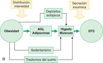 diabetes tipo 1 fisiopatología descargar pdf