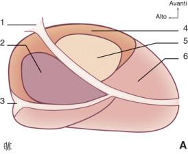 prostata agitante con formazione di circa 1 84 cmm 2