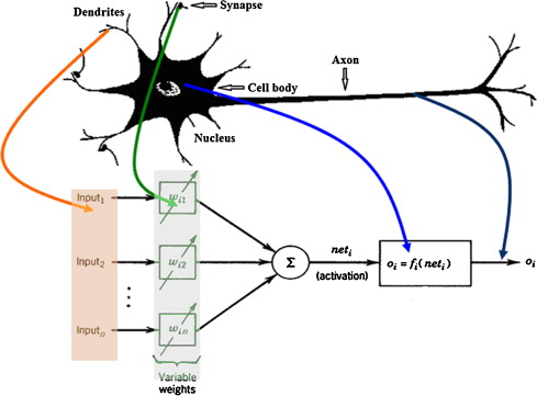 Utilization of artificial neural networks to prediction of the schematic of a biological neuron associated with computational neuron 22 23 ccuart Gallery
