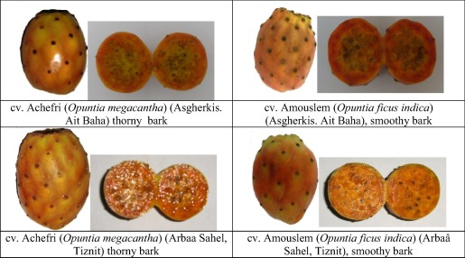 Phytochemical study of prickly pear from southern Morocco