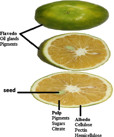 Citrus peel as a source of functional ingredient: A review