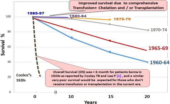 Thalassemia Major: Transplantation or Transfusion and Chelation
