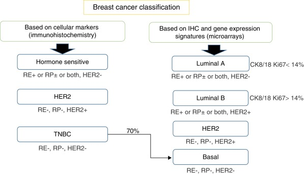 Breast cancer negative studies Triple