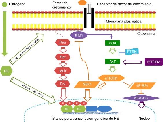 cancer mama hormonal negativo pentru prevenirea viermilor din pastilele pentru adulți