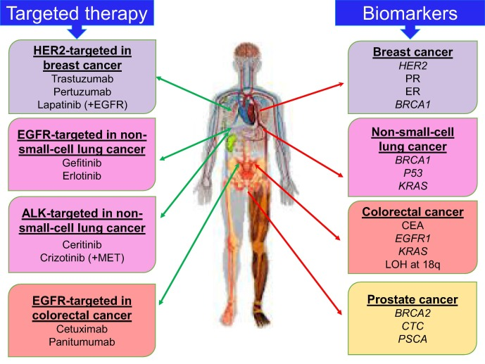 Exploitation Of Gene Expression And Cancer Biomarkers In Paving The Path To Era Of Personalized Medicine Sciencedirect