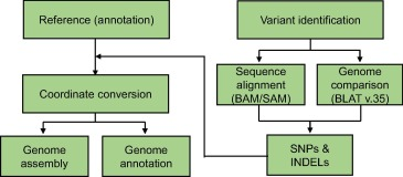 RGAAT: A Reference-based Genome Assembly and Annotation Tool