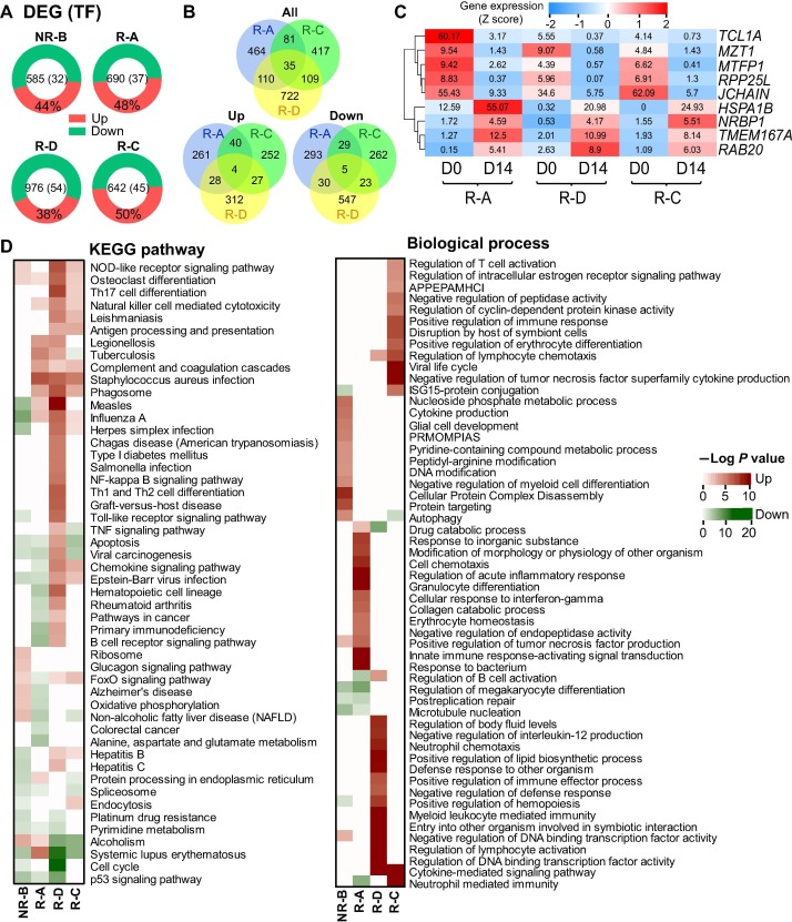 Transcriptome and Regulatory Network Analyses of CD19-CAR-T