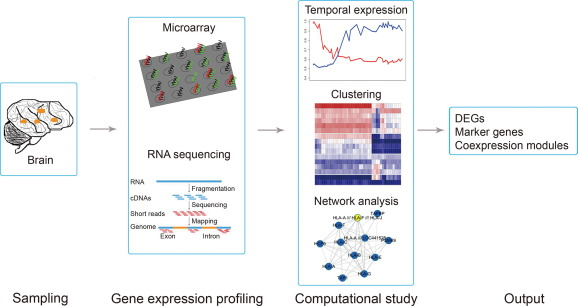 Application of Computational Biology for Decoding Brain