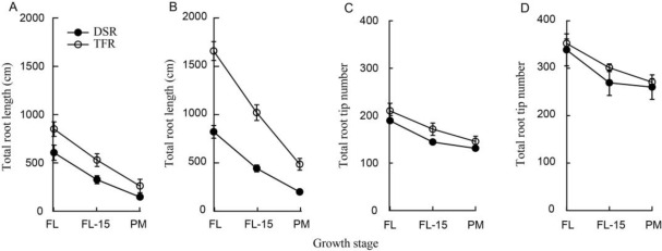 Correlation of Leaf and Root Senescence During Ripening in Dry