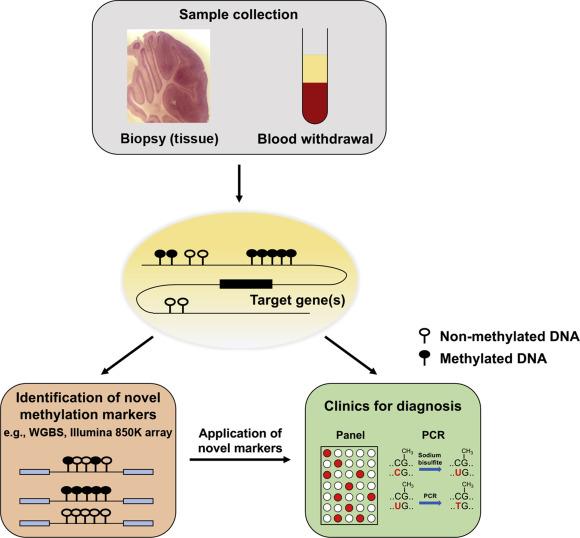 Developing DNA methylation-based diagnostic biomarkers