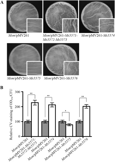 Characterization of a novel regulatory pathway for mannitol