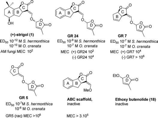new concept fe5f1 02437 Structure and Activity of Strigolactones: New Plant Hormones ...