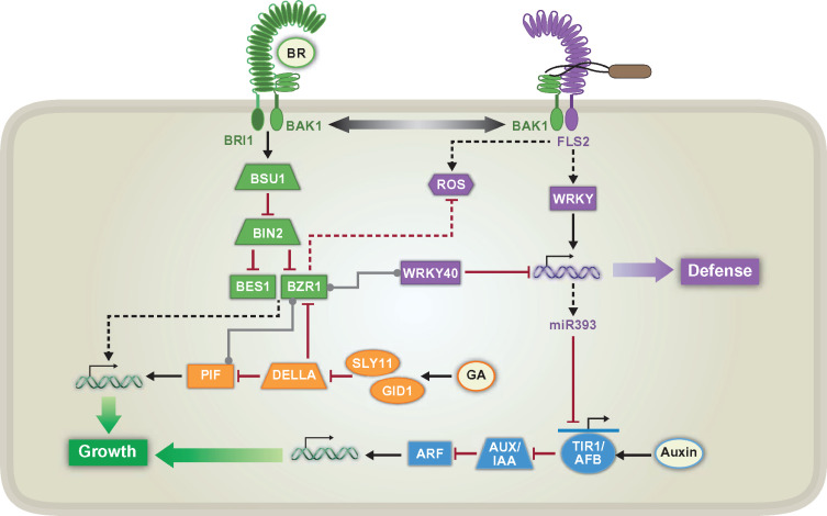 PLANT GROWTH-PROMOTING RHIZOBACTERIA AND CROPS – POTENTIAL AND INCONSISTENCY