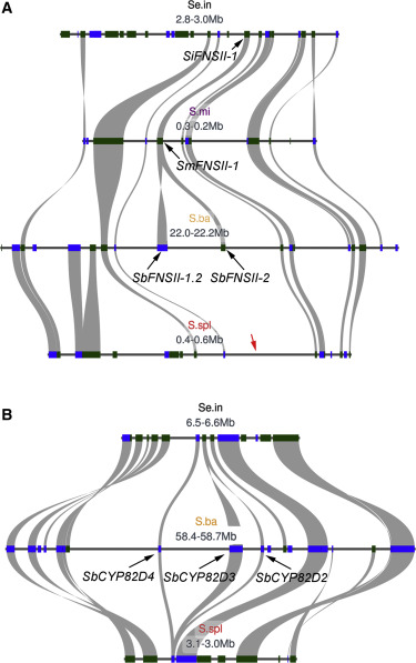 The Reference Genome Sequence of Scutellaria baicalensis