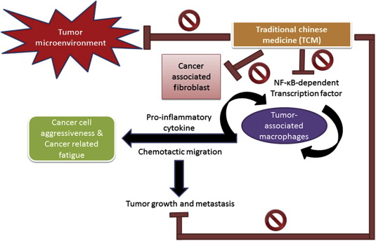 neuroendocrine cancer and fatigue