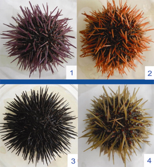 Preliminary Studies On Habitat And Diversity Of Some Sea Urchin