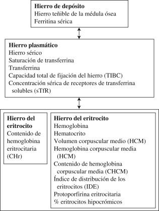 que es hemoglobina corpuscular media baja
