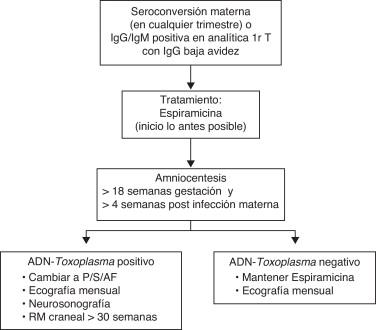 signos y sintomas de toxoplasmosis en el embarazo