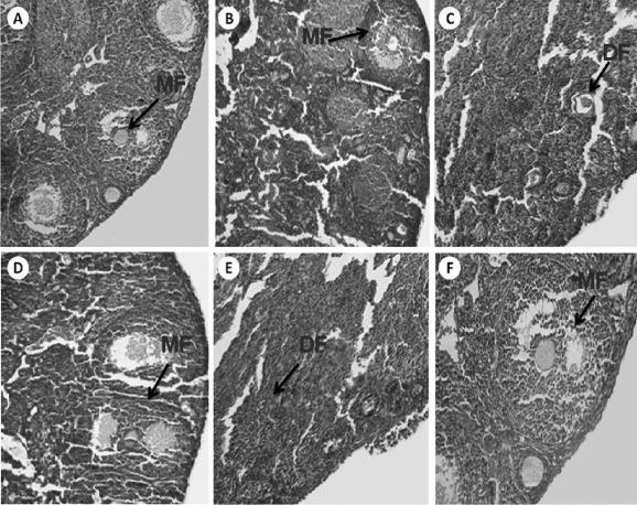 Effects of Vitex agnus-castus fruit on sex hormones and