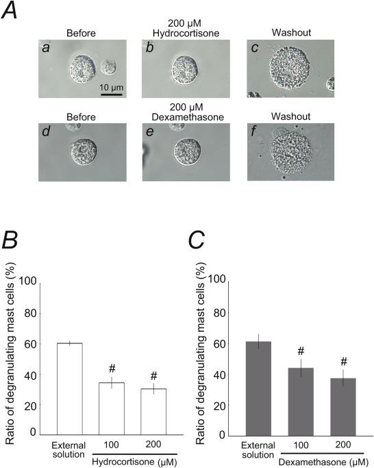 Hydrocortisone and dexamethasone dose-dependently stabilize mast