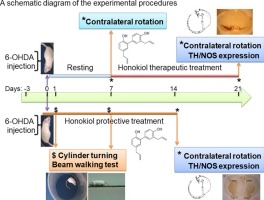 Protective and therapeutic activity of honokiol in reversing motor ...