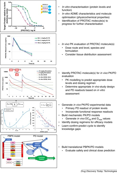 Targeted protein degradation in vivo with Proteolysis Targeting