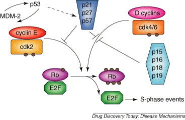 Human papillomavirus oncogenes, Paraziti cu piper Hpv virus cancer mechanism