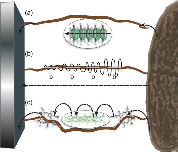 Microbial nanowires – Electron transport and the role of