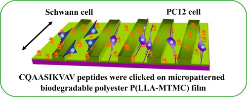 Experimental Biodegradable Traffic >> Micropatterned Biodegradable Polyesters Clicked With Cqaasikvav