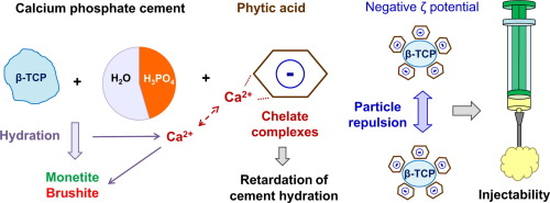 Hydration mechanism of a calcium phosphate cement modified