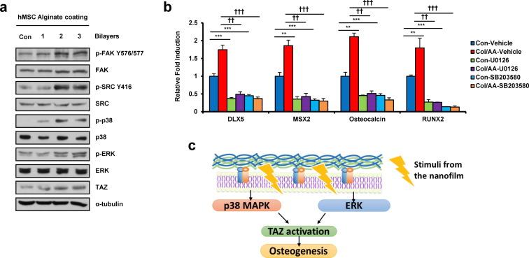 Artificial cellular nano-environment composed of collagen