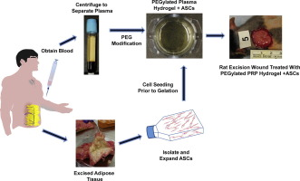 Platelet rich plasma hydrogels promote in vitro and in vivo