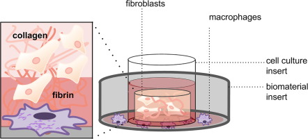 An in vitro model mimics the contact of biomaterials to blood
