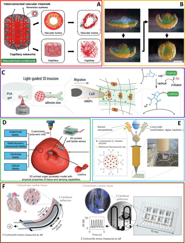 Integration of biological systems with electronic-mechanical