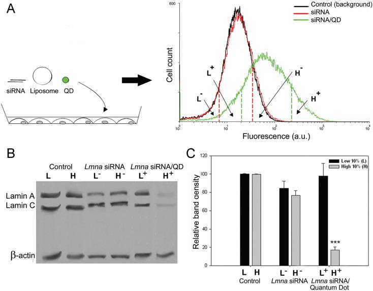 Quantum dots in biomedical applications - ScienceDirect