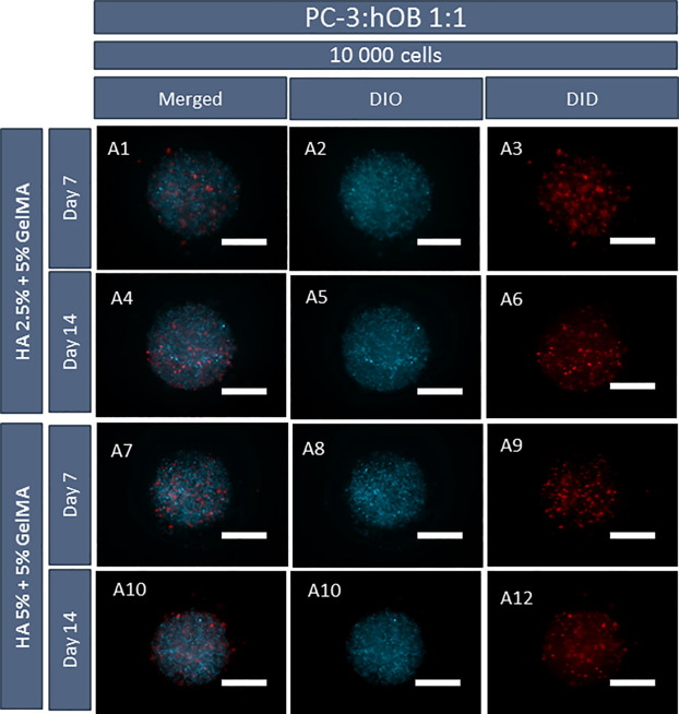 In-air production of 3D co-culture tumor spheroid hydrogels