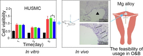 In vitro and in vivo studies on magnesium alloys to evaluate