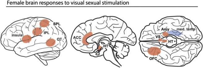 Sexually stimulating art