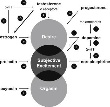 Dopamine and oxytocin role in sex