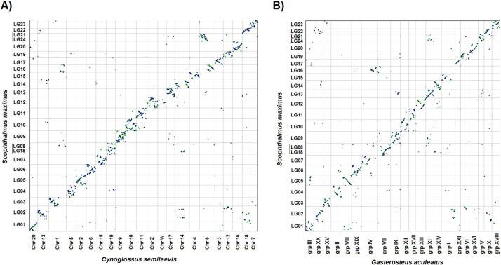 Integrating Genomic Resources Of Flatfish Pleuronectiformes To
