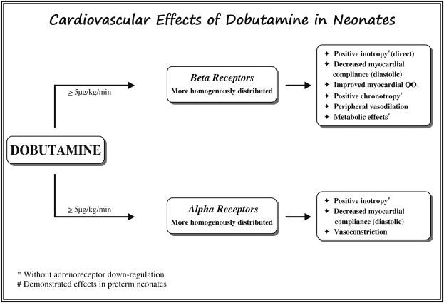 Neonatal Hypotension Dopamine Or Dobutamine ScienceDirect