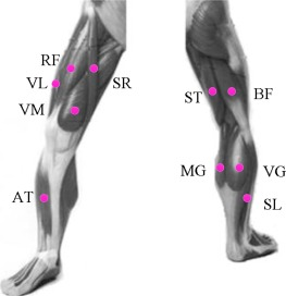 b8f1c9d4962b6 Surface EMG based continuous estimation of human lower limb joint ...