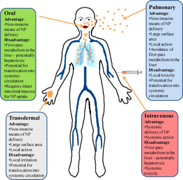 Toxicology and clinical potential of nanoparticles - ScienceDirect