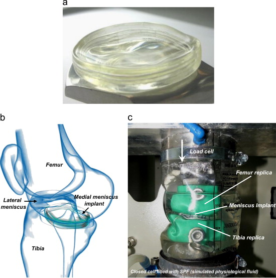 Viscoelastic properties of a synthetic meniscus implant - ScienceDirect