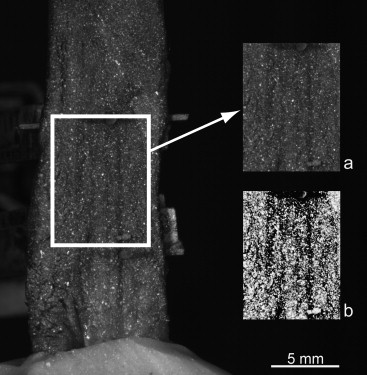 An Effective Procedure To Create A Speckle Pattern On Biological Soft Tissue For Digital Image Correlation Measurements Sciencedirect