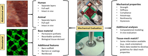 Mechanical properties of the abdominal wall and biomaterials