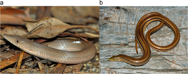 Surface structure and tribology of legless squamate reptiles